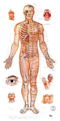 acupuncture-chart main